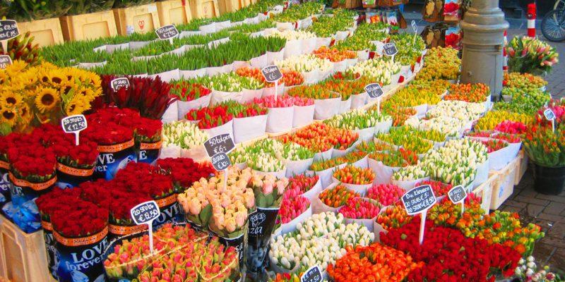 Тур Берлин - Амстердам - Прага из Минска amsterdam-flower-market-bloemenmarkt-800x400